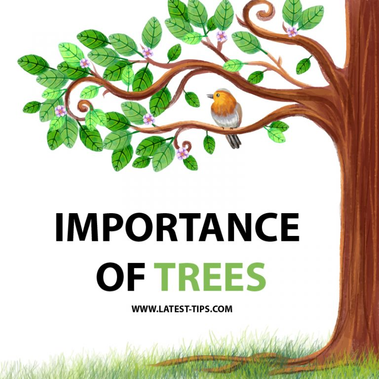 Importance of trees essay 1000 words #2021