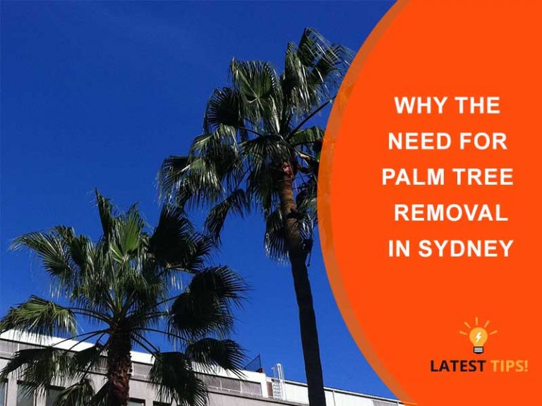 Why the Need for Palm Tree Removal in Sydney