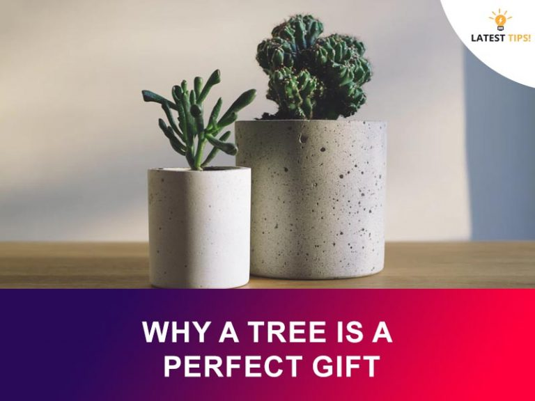 Latest Tips – Why a Tree is a Perfect Gift